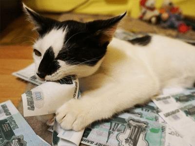 Не лает, не кусает, а налоги сочиняет... Будут ли брать деньги за содержание домашних животных?
